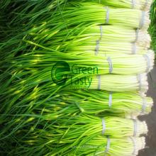 Corte de brotes de ajo congelados IQF de alta calidad
