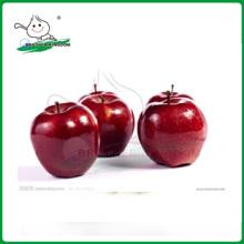 Roter köstlicher Apfel / huaniu Apfel / neue Qualität China frische Spitze rote huaniu Äpfel