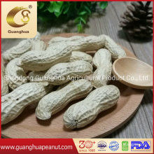 Factory Hot Sale Peanut in Shell New Crop