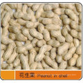 Export Excellent Peanut in Shell
