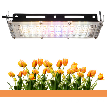 150 w Plant Factory Farming led grow light