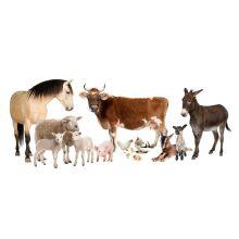 L-Tryptophan Feed Additives Promouvoir la croissance animale L-Tryptophan