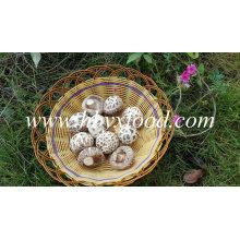 Высокое Качество Среза Стебля Обезвоженной Большой Белый Цветок Шиитаке