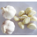 IQF Frozen Peeled Garlic Clove Jar Packing
