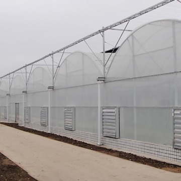 Multi Span Film Covering Greenhouse for Vegetables