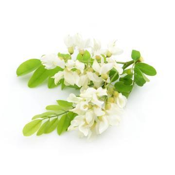 Натуральный экстракт растений экстракт софоры японской