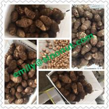 New Fresh Taro EU Quality