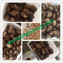 Новое качество Fresh Taro EU