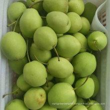 New Crop High Quality Fresh Pear / Shandong Pear (70-80-90-100)
