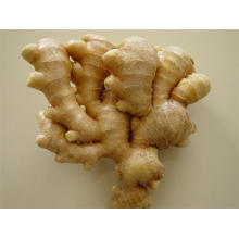 A GOOD QUALITY BIG SIZE NEW CROP FRESH GINGER