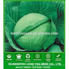 NC06 Renxian F1 sementes híbridas de repolho de alto rendimento para cultivo