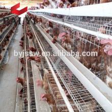 Layer Chicken Gage for Chicken Housing Plan (5000 Birds, 10000 Birds, 20000 Birds)