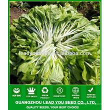 NPK05 Binla Grüne chinesische Gemüse Pak Choi Samen für Open Air