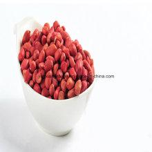 Amendoim de Pele Vermelha, Tipo Roud, Silihong