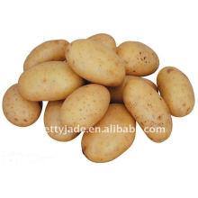 Low price fresh yellow potato from china