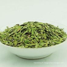 Yunnan Yhc cassé thé vert