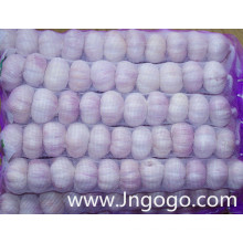 Nueva Cosecha Fresh High Quality Normal White Garlic