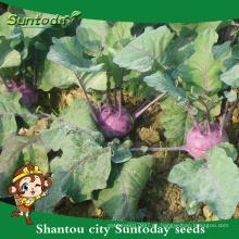 Suntoday netural purple vegetable F1 cultivo de agricultural Organic kolhrabi comprar semillas de herloom (A44001)