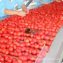 Top Quality and Competitive Price Tomato