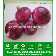 NON02 Hongqiu op semillas de cebolla roja en venta semillas de hortalizas de china