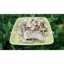 Professioanl Manufacture Supply Wild Porcini Mushroom