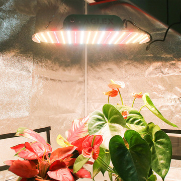 Lámpara LED Aglex impermeable Full Spectrum 1000w Grow
