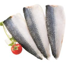 Frozen Fish Mackerel Pacific Fillet Vaccum Pack