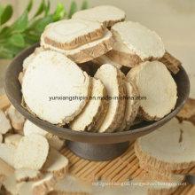 Radix Angelicae, Angelica Root Factory Best Price