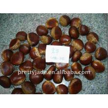 Chestnut price