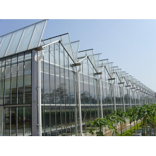 Tomato Cucumber Flower Horticulture Venlo Glass Greenhouse