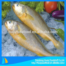 Poisson d'eau de mer sauvage de haute qualité Croaker jaune gelé