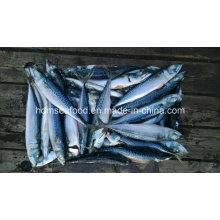 Новая скумбрия из свежей рыбы