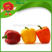 Dr pepper Venta al por mayor Color rojo orgánico Bell Pepper