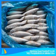 Kinds of size frozen mackerel fish