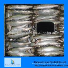 best fresh frozen sardine