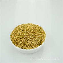 New Crop White Broomcorn Millet For Animal Food