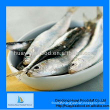 good price frozen cheap sardine companies and supplier