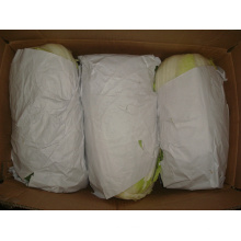 Novo Colheita de Repolho Fresco para Exportação (1.5kg)