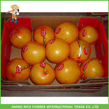 Factory Price Sweet Fresh Pomelo For Russia
