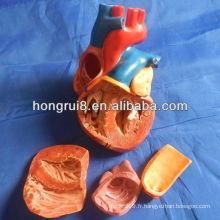 Modèle de coeur adulte de style nouveau ISO