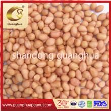 Best Quality Baisha Peanut Kernels New Crop Round Shape