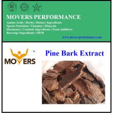 Extrait d'écorce de pin d'approvisionnement naturel de haute qualité
