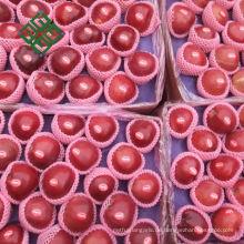 Chinesischer Galaapfel frischer Apfel für neue Jahreszeit