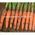 Высокий раз овощ для продажи реликвия УГ семян моркови код возделывания сельскохозяйственных семян посев plantting сеятеле (51004)