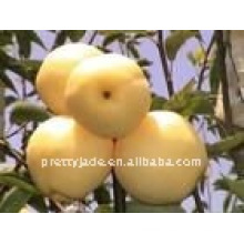 Chinese Centurial pear(white)