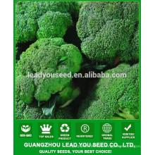 NBR011 Wanliu mejores semillas de brócoli de alto rendimiento de China