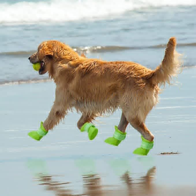 Dog Rain Boots