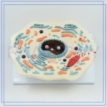 PNT-0815 agrandie 20 000 fois le modèle de cellule animale