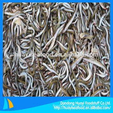 seafood company supply frozen sand lance for fish feed purpose