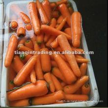 Chinesische Karotte zum Verkauf